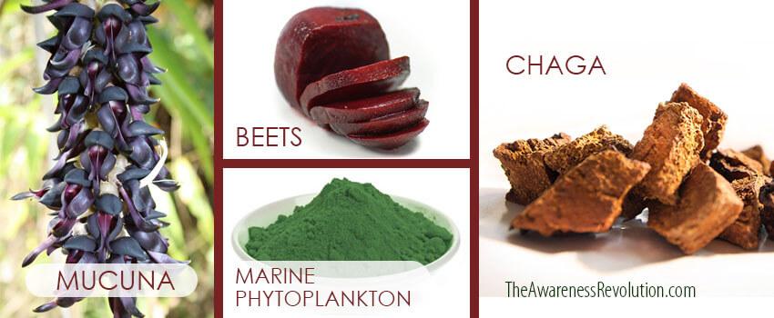 Parkinson's Protocol: mucuna, marine phytoplankton, chaga, beet root (betaine)