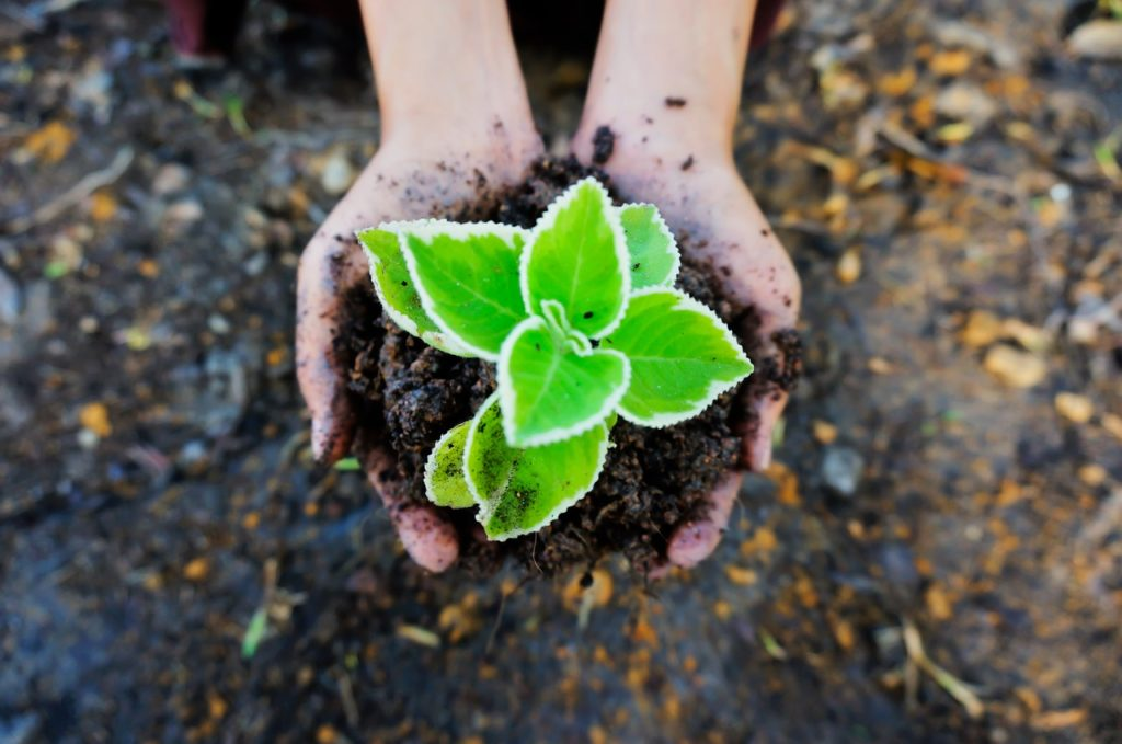 Soil: The Best Food & Healing Energy Comes From The Ground – Ep. #1