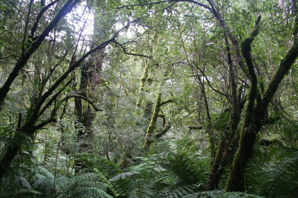 Why We Should All Be Concerned About Saving The Rainforests